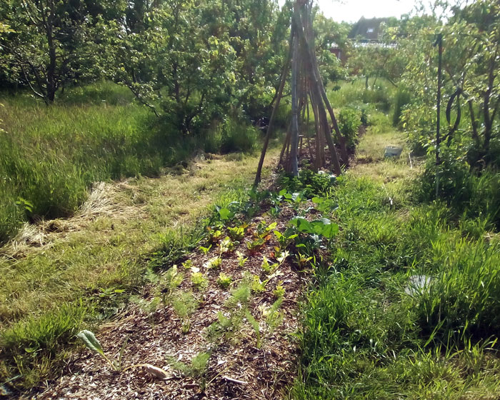Permaculture-photo-Anne-Catherine-Bievelez