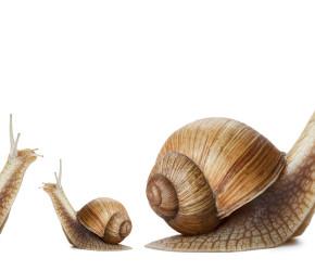 Slow-Attitude-UNE